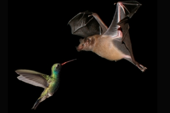 Genomes in Flux: New Study Reveals Hidden Dynamics of Bird and Mammal DNA Evolution