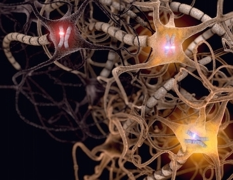 Playing Favorites: Brain Cells Prefer One Parent's Gene Over the Other's