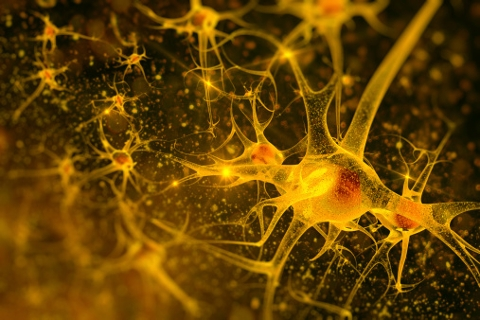 Treatment Reverses Signs of Two Degenerative Brain Diseases, ALS & Ataxia, in Mice