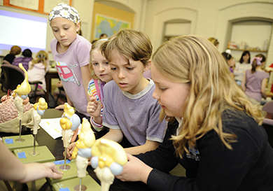 Touch a Human Brain and Learn About the Wonders of the Mind During Brain Awareness Week